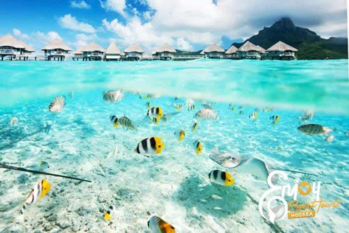Enjoy Moorea Tour
